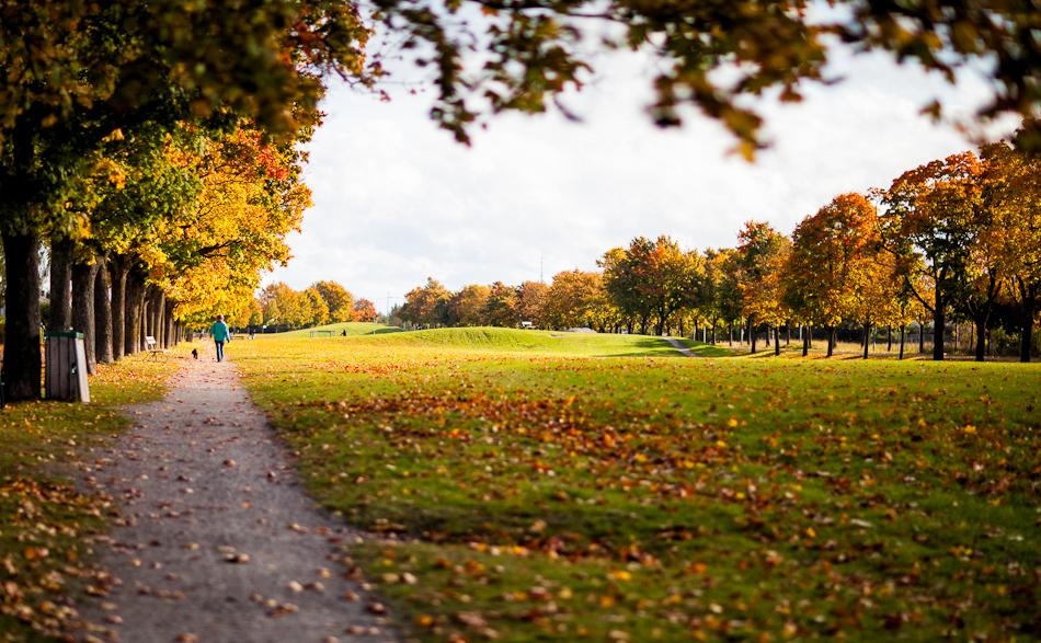 Autumn Fålhagen